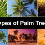 Types of Palm Trees